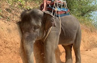 This picture has convinced thousands in Vietnam that elephant riding and circuses must end