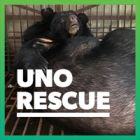 One bear closer to ending bear bile farming in Vietnam