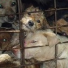 Dog thief sentenced to death as dog meat crimes spiral