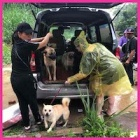 Dog and cat shelters destroyed by floods in China