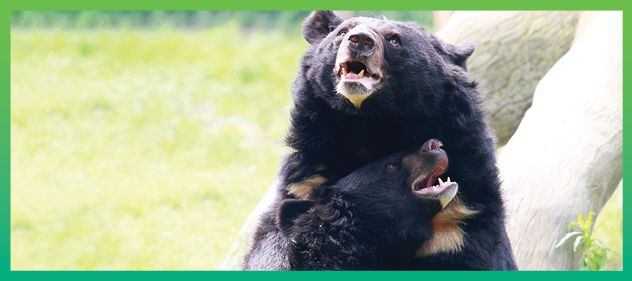 Bear Sanctuaries