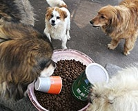 Dog and Cat food gets into Wuhan