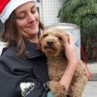 Chinese dogs enjoy vaccinations, de-worming – and a taste of Christmas