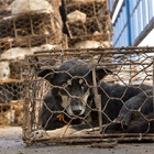 Five ways the Yulin dog meat festival could end with your help