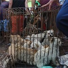 About Animals Asia's #EndYulinFestival campaign