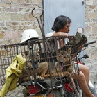 10 lessons we must all learn from 2016's Yulin dog meat festival