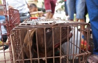 Animals Asia launches campaign to end Chinese dog meat eating festival