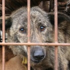 Why does animal abuse persist worldwide?