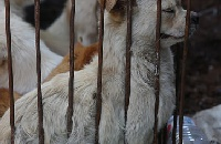 As Yulin festival approaches, crowdsourced reporting of dog and cat meat illegality has saved dog lives across China