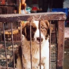 China's dog meat industry hiding in the shadows as world watches