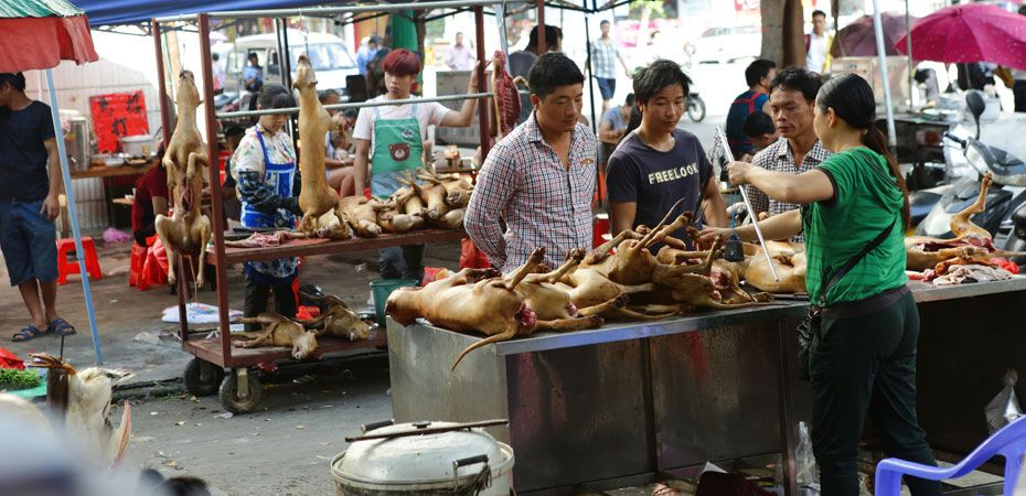 Images from Yulin Festival 2016