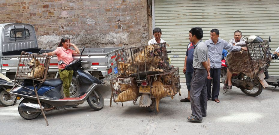 Chinese animal charities urge animal lovers to stop buying dogs in Yulin