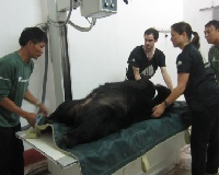 Sick bear recovering after Vietnamese military came to his aid