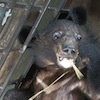 Moon bear cubs rescued from smugglers