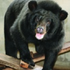 Rescued moon bear tragically passes away just as cruelty-free life was beginning