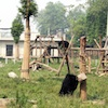 Environmental investment for Vietnam bear sanctuary, thanks to Green Dragon Fund