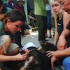 Bile bear turned pet handed over to Animals Asia in Vietnam