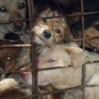 Joining the Dog Meat Free Indonesia coalition: Now is the time to hold the government to their promise for a total ban