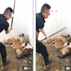 Animal shelter beatings: latest scandal must convince Chinese authorities to accept help