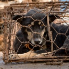 Chinese police follow huge dog meat bust with a winter warning