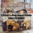 Report reveals Chinese dog eating as minority activity with widespread support for ban