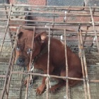Police bust dog meat gang in China and save 35 dogs from slaughter