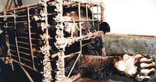 Petition · Help stop the barbaric medical torture of harvesting ...