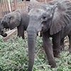 Campaign sees baby elephants return to the wild in Zimbabwe