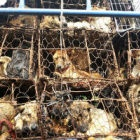 Five reasons why Yulin Dog Meat Festival must stop