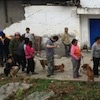 Help for homeless and hungry dogs and cats following Sichuan earthquake