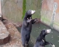 Animal protection laws promised after Indonesian bear footage goes viral
