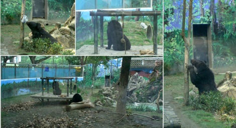 Chengdu Zoo improved the conditions in its bear enclosures following an enrichment workshop at Animals Asia's China Bear Rescue Centre