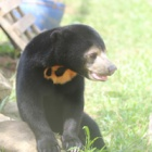Poachers left this sun bear orphaned and alone – now heroes have rebuilt her life