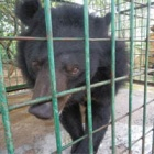 #moonbearmonday: Buddhist-blessed bear rescue