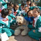 Children in China learn to love dogs