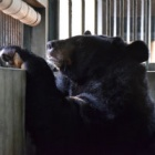 Traumatised bear Sky is lowering her guard but road to recovery will be long