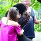 TAKE ACTION: Help Ajib – a traumatised sun bear mother so damaged she behaves like a cub