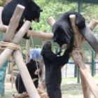#Moonbearmonday: A little help from my friends