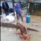 A calf is cooked alive in China - the video we refuse to share
