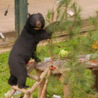 Edible presents and Christmas cheer are the perfect gift for hundreds of rescued bears