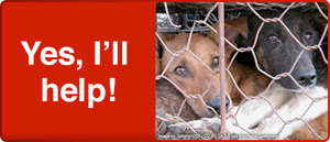 Facts About the Abuse of Dogs & Cats in Asia