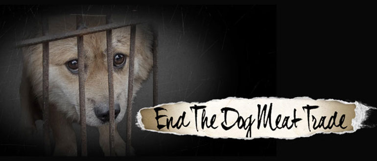 Facts About the Asian Dog Meat Trade & Dog Meat Festivals