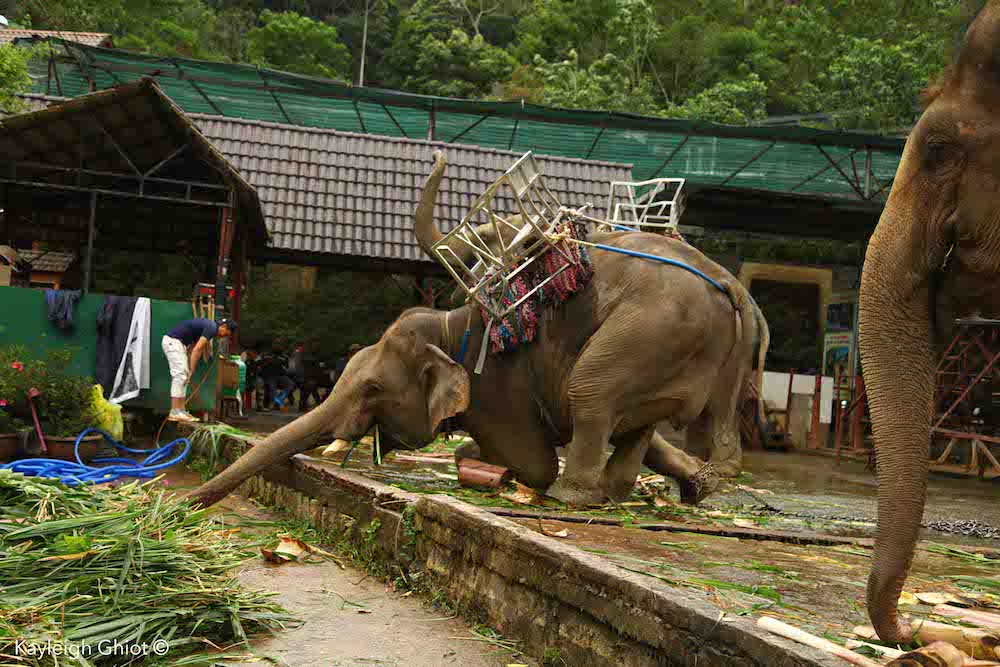 The truth about elephant riding