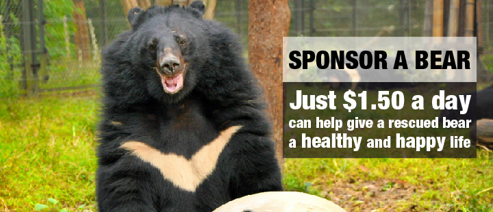 Rescued Moon Bears Find Solace In Each Other After Years Of Neglect