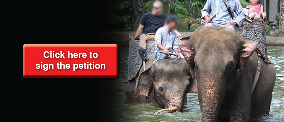 5 shocking examples of animal abuse available right now on