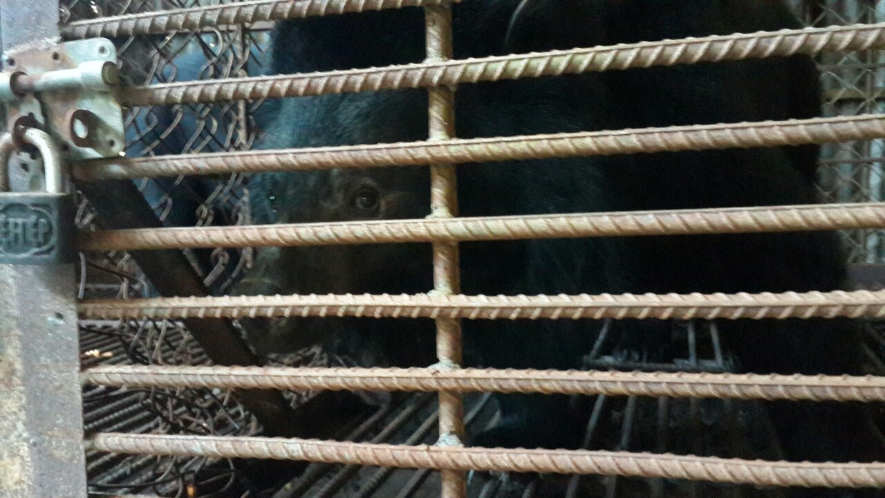 All bear bile farms will be closed – My Dream for Animals