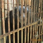 Caged bears to make 2,000km journey to freedom