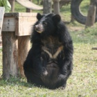 #Moonbearmonday: Cat Ba's moment in the sun