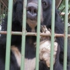 We expose shocking conditions at horror bear bile farm