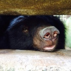 Meet Coco and Yogi - the Ben Tre bears
